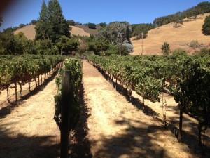 More Vineyard Visits