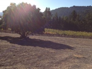 vineyard above