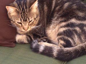 kitty_d