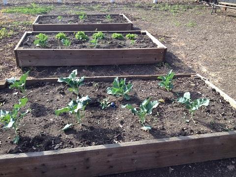 Front Yard & Garden Update