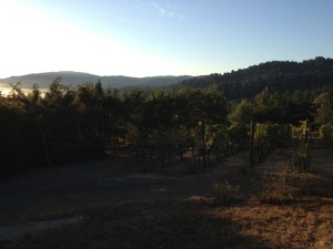 Chaine d Or Harvest Pics and Pressing